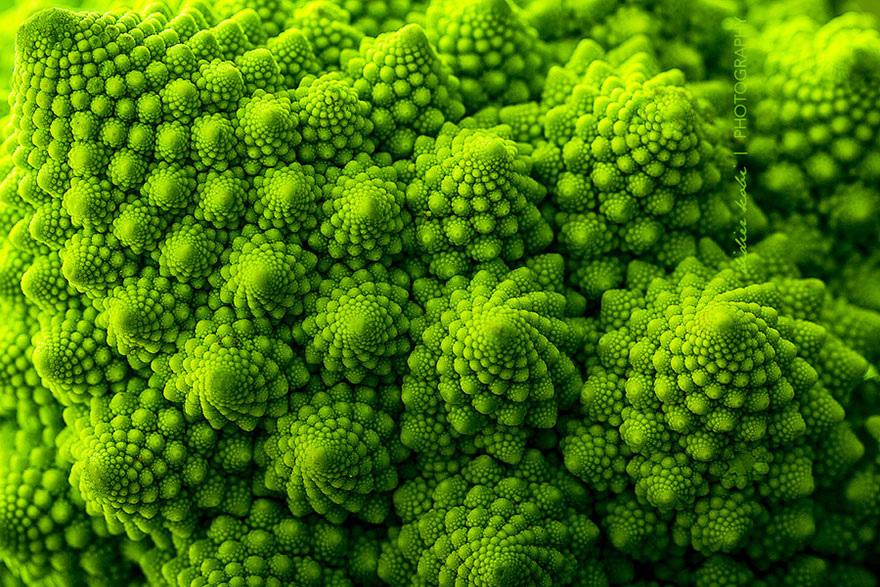 Fractals sacred geometry plants 10
