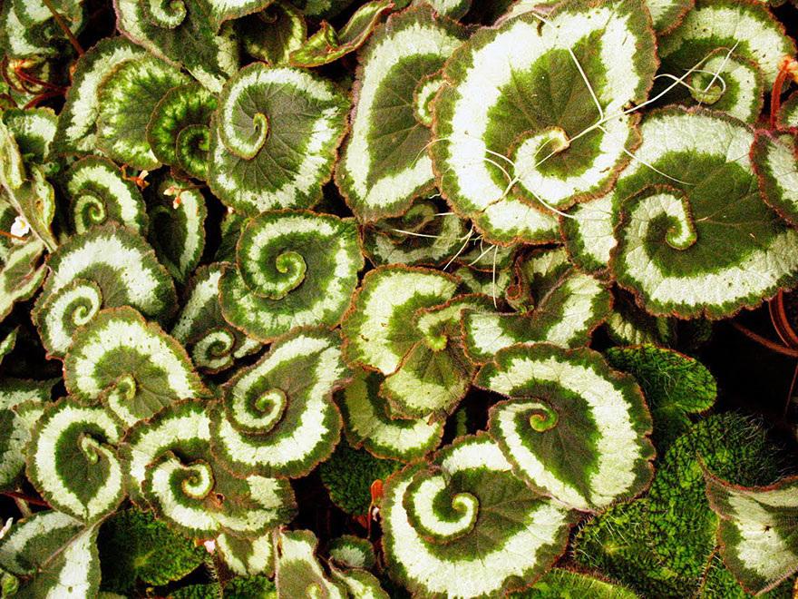 Fractals sacred geometry plants 11