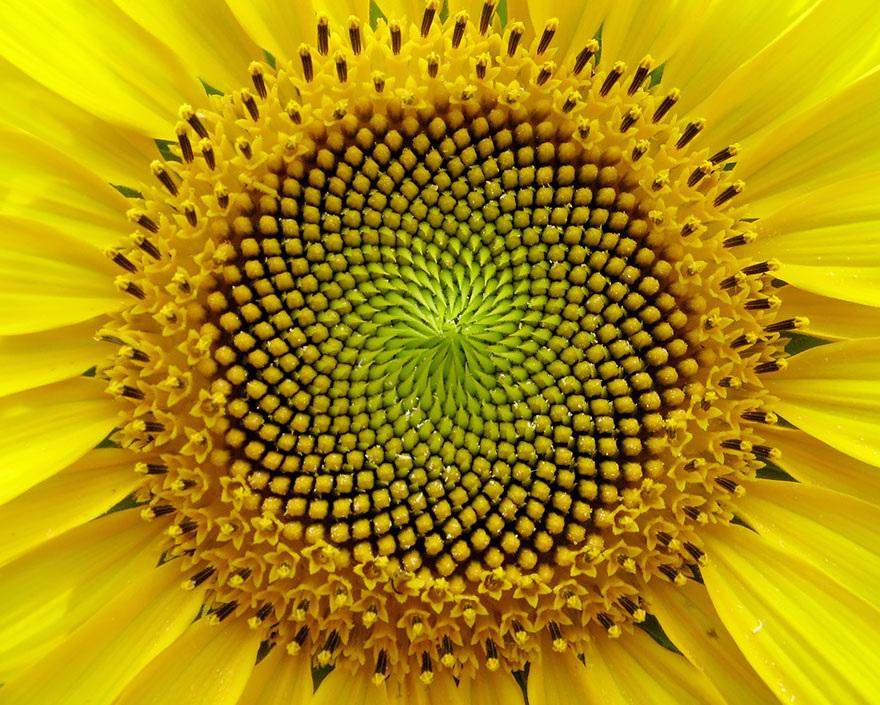 Fractals sacred geometry plants 13