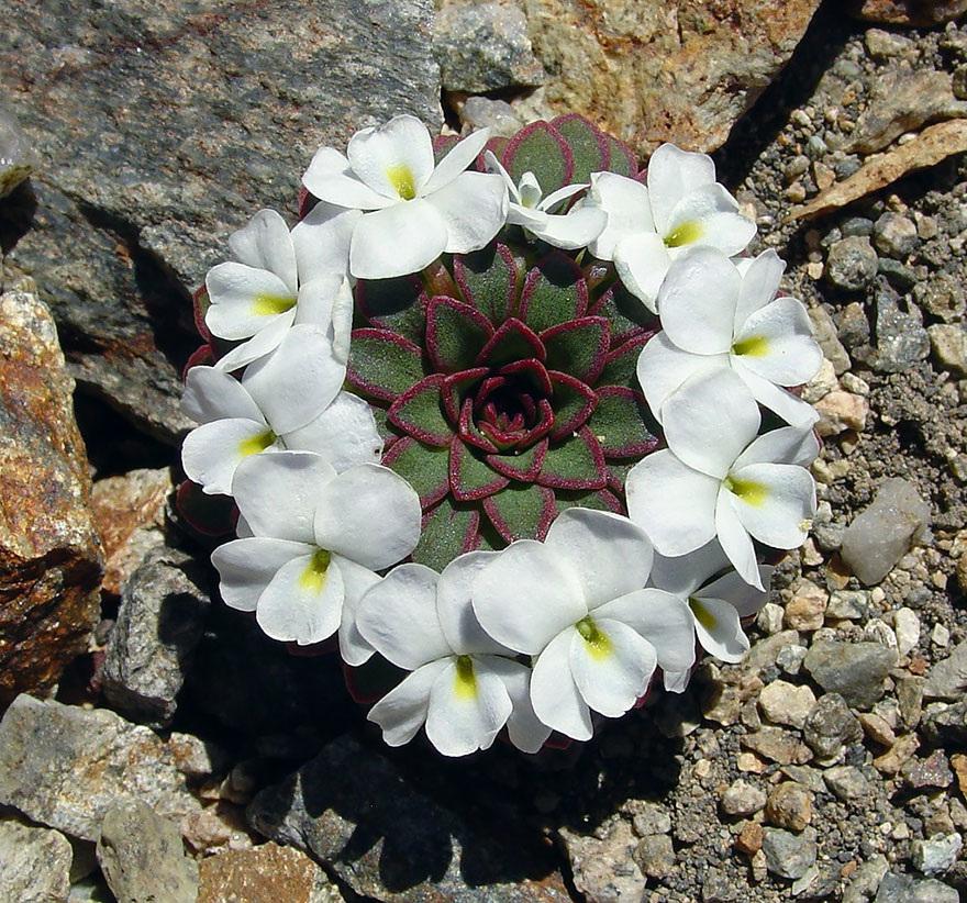 Fractals sacred geometry plants 15