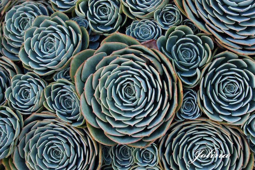 Fractals sacred geometry plants 3
