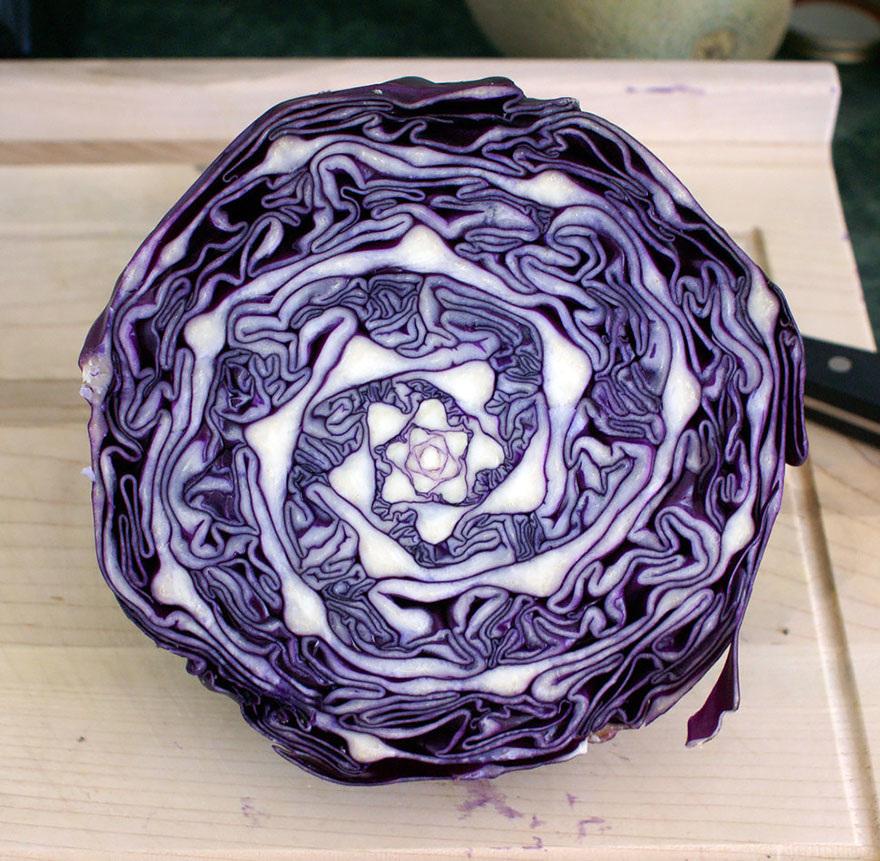 Fractals sacred geometry plants 5