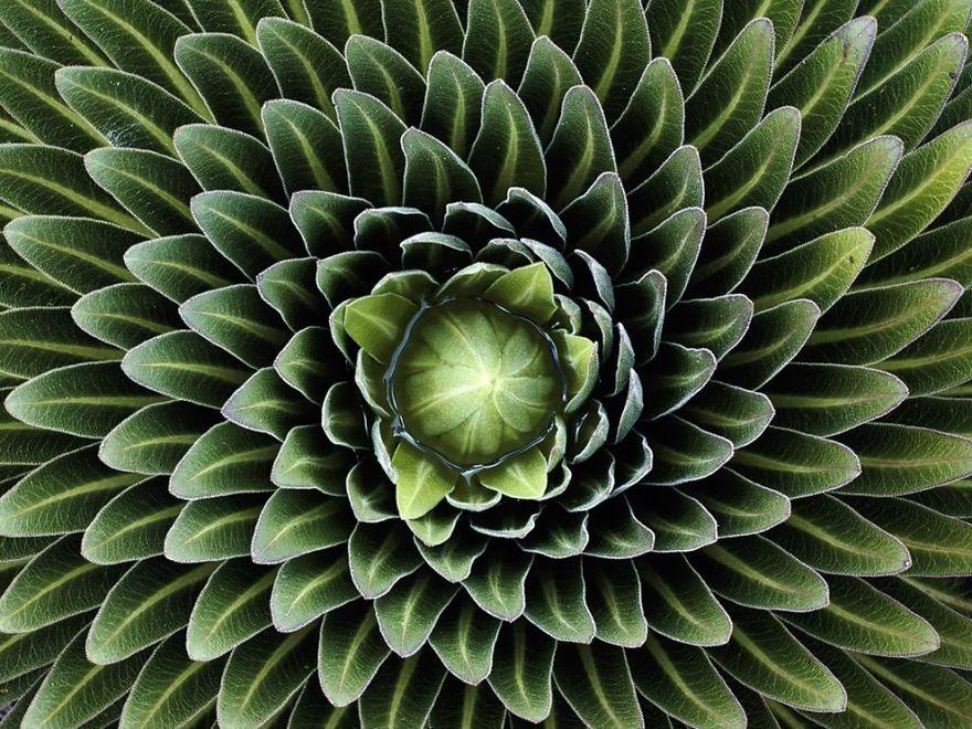 Fractals sacred geometry plants 6