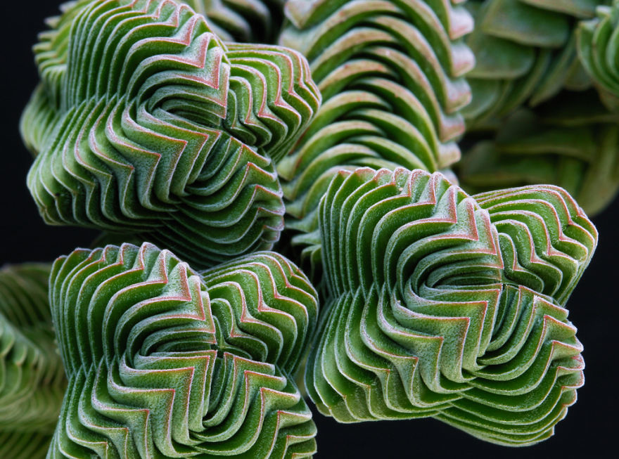psychedelic plants 1
