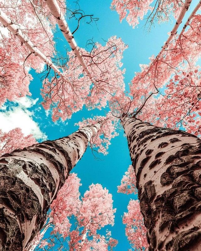 יער סתווי פסיכדלי ביוטה ארהב
